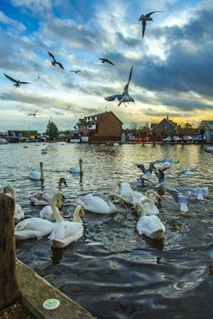 Bog, paperback Swans and Seagulls at Sunset in Wroxham, England af Unique Journal