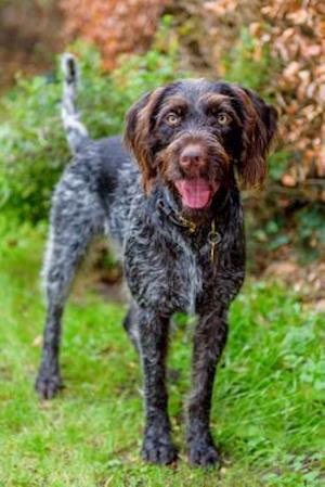 Bog, paperback German Wirehaired Pointer af Artified Pets