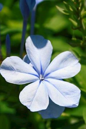 Blue Plumbago Journal
