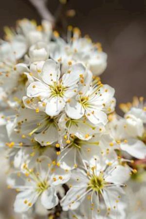 Bog, paperback Hawthorn Blossoming, for the Love of Flowers af Unique Journal