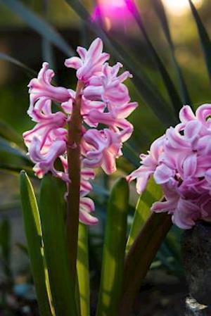 Bog, paperback Pink Hyacinth Blooming in an English Garden af Unique Journal
