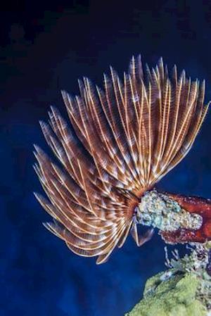 Bog, paperback Feather Duster Worm - Sabellastarte Spectabils Benthic Marine Polychaete Journal af Cool Image