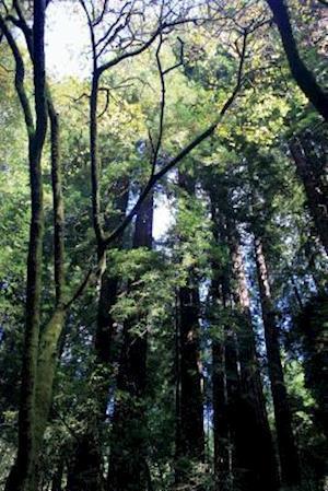 Bog, paperback Muir Woods in California Journal af Cool Image