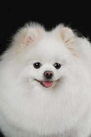 Bog, paperback Fluffy White Pomeranian Dog Journal af Cs Creations