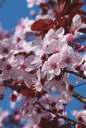 Bog, paperback The Almond Blossom Journal af Cool Image