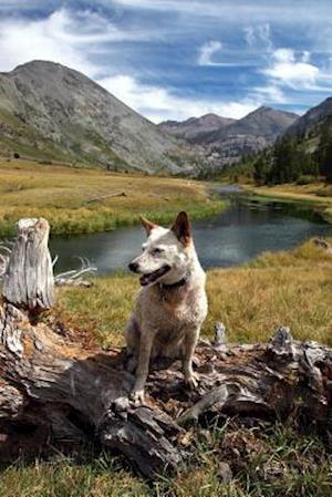 Bog, paperback Red Heeler Australian Cattle Dog in Sierra Nevada Range California Journal af Cool Image