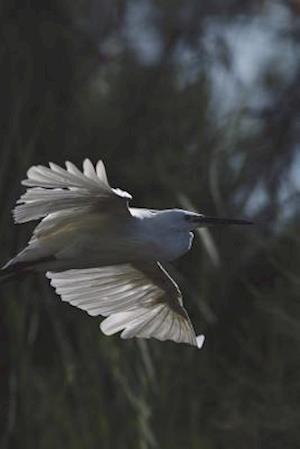 Bog, paperback White Egret in Flight Journal af Cool Image