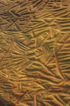 Bog, paperback Edakkal Caves Petroglyph in India Journal af Cool Image