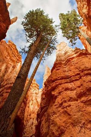 Bog, paperback Pine Trees at Bryce Canyon Natiional Park Utah USA Journal af Cs Creations