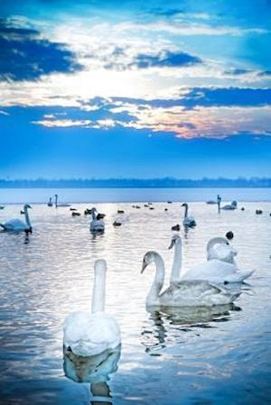Bog, paperback A Flock of Elegant White Swans on a Lake Journal af Cs Creations