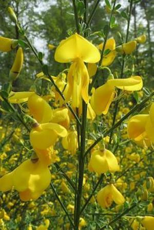 Bog, paperback Cytisus Scoparius Common Scotch Broom Flower Blooming af Unique Journal
