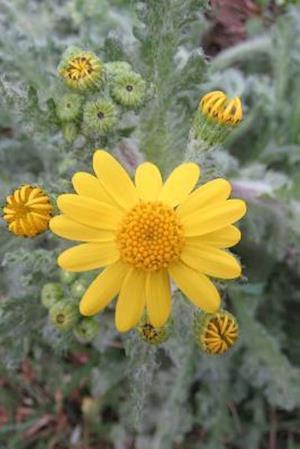 Bog, paperback Senecio Vernalis Eastern Groundsel Flower Blooming af Unique Journal