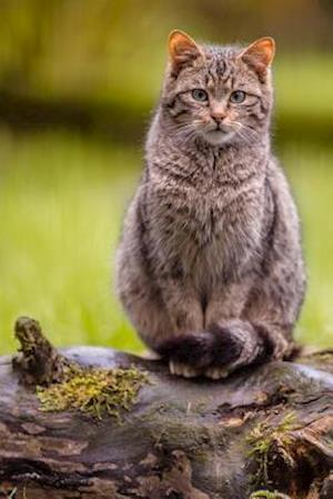 Bog, paperback A European Wildcat (Felis Silvestris Silvestris) Journal af Cs Creations