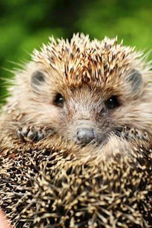 Bog, paperback Cutest Little Hedgehog Journal af Cs Creations