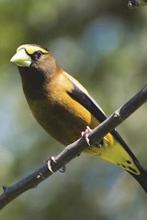 Bog, paperback Evening Grosbeak Bird Perched on a Branch Journal af Cool Image