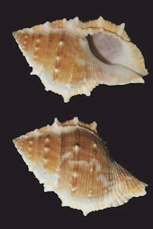 Bog, paperback Seashells on Black Journal af Cool Image