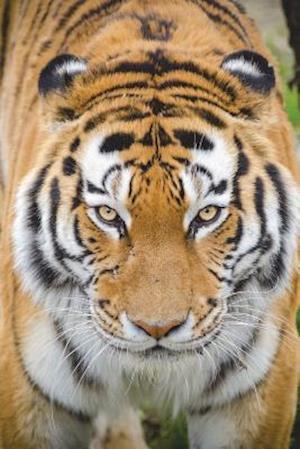 Bog, paperback What's Up, Tiger? Journal af Cool Image