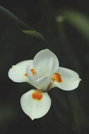 Bog, paperback White Orchid Journal af Cool Image