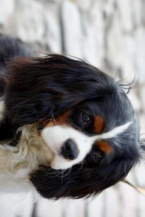 Bog, paperback Beautiful Cavalier King Charles Spaniel Dog af Unique Journal