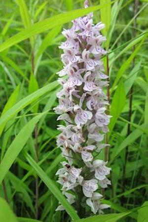 Bog, paperback Dactylorhiza Marsh Spotted Orchid Flower Blooming af Unique Journal