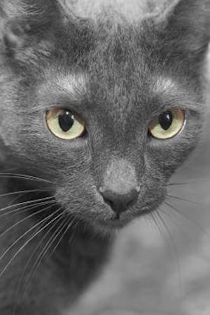 Bog, paperback Gorgeous Gray Domestic Short Hair Cat Portrait Journal af Cs Creations