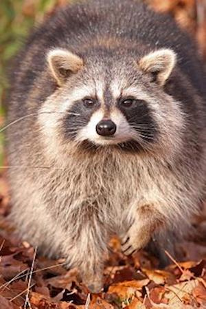 Bog, paperback Raccoon in the Woods Journal af Cs Creations