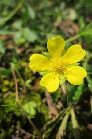 Bog, paperback Yellow Potentilla Erecta Tormentil Flower Blooming af Unique Journal