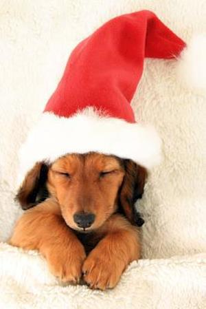 Bog, paperback Sleeping Christmas Dachshund Puppy in Santa Hat Journal af Cool Image