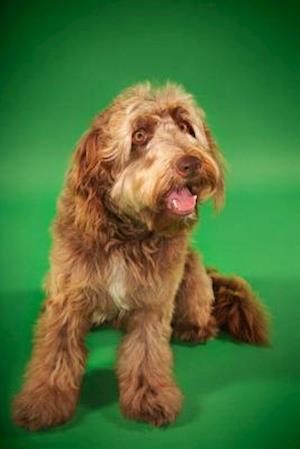 Bog, paperback Otterhound af Artified Pets