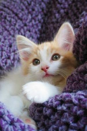 Bog, paperback Adorable Maine Coon Kitten on a Purple Blanket Journal af Cool Image