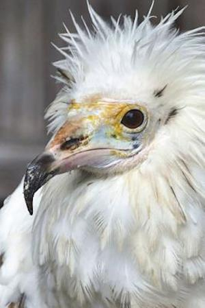 Bog, paperback Hey, White Vulture, I'm Not Dead Yet Journal af Cool Image