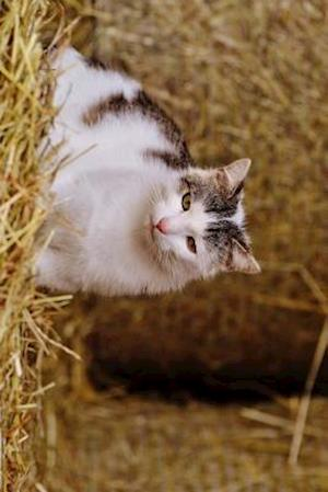 Bog, paperback A Farm Cat Relaxing in a Barn af Unique Journal