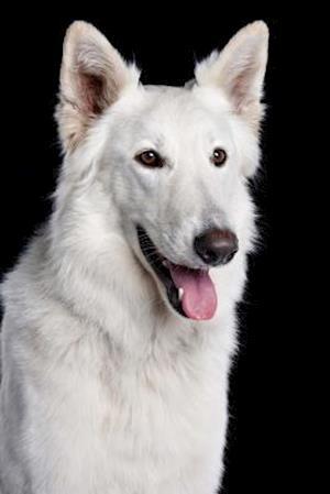 Bog, paperback Happy Berger Blanc Suisse Dog Portrait Journal af Cs Creations