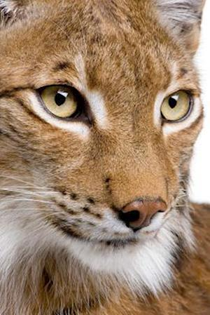 Bog, paperback Close Up of a Beautiful Eurasian Lynx Journal af Cs Creations