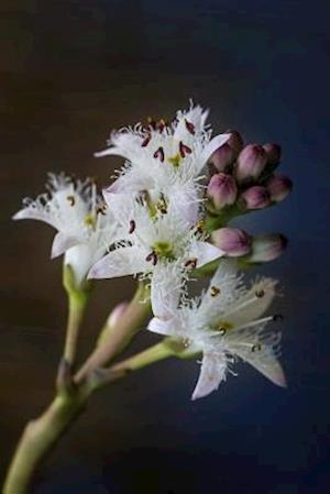 Bog, paperback Bogbean (Menyanthes Trifoliata) Water Plant Journal af Cs Creations