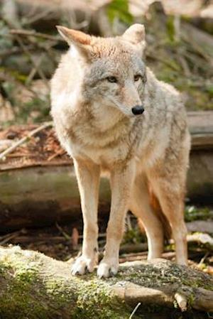 Bog, paperback Coyote (Canis Latrans) in the Wild Journal af Cs Creations
