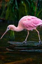 Beautiful Roseate Spoonbill (Platalea Ajaja) Bird Journal