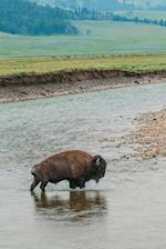 Wild Buffalo Crossing a River Journal