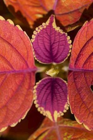 Bog, paperback Red Coleus Leaves Up Close Plant Journal af Cs Creations