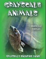 Grayscale Animals Turtles