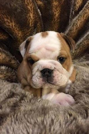 Bog, paperback Adorable English Bulldog Puppy Journal - What a Cute Pup! af Cool Image