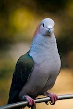 Sulawesi Green Imperial Pigeon Bird Journal