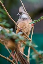 Speckled Mousebird (Colius Striatus) Journal