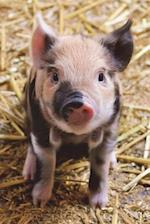 Piglet on a Pig Farm Journal