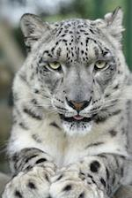 Snow Leopard Is Not Amused Journal