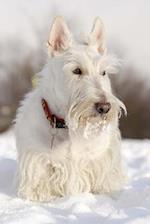 Cutest White Scottish Terrier (Scotty) Dog Journal