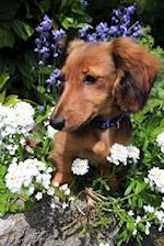 Longhaired Dachshund Dog Among the Flowers Dog Journal