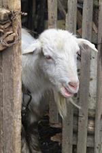 Curious White Billy Goat Peeking Through a Wooden Gate Journal