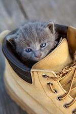 Adorable Gray Kitten in a Shoe Journal