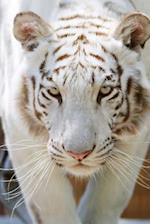 White Bengal Tiger Is Not Amused Journal